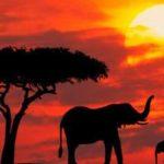 Свадебный тур, Отдых в Кении